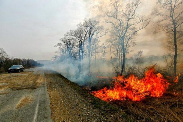 В Приморье пожары