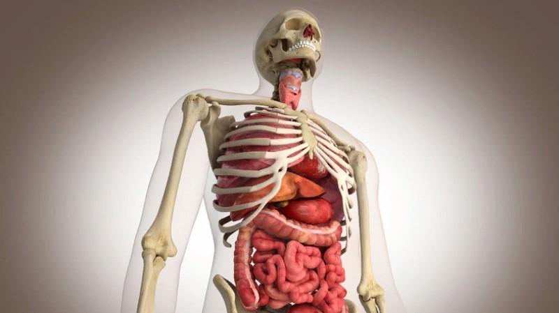 Сколько стоят человеческие органы