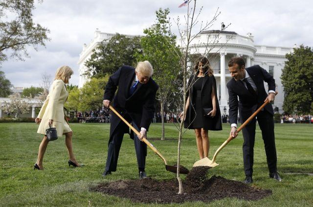 дуб, посаженный Макроном и Трампом