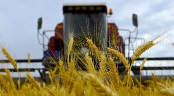 США ожидает рекордный урожай зерновых в Украине